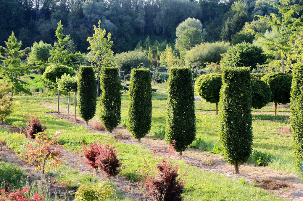 Pflanzungen f r ihren garten vom profi niedenhoff gartenbau - Gartenbau kiel ...