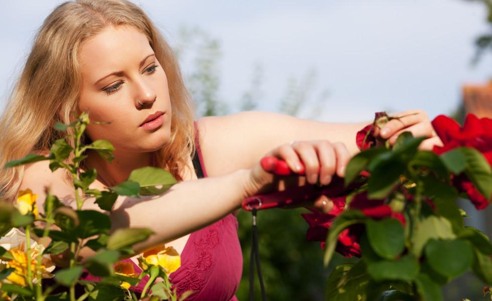 Garten – gärtnern im Rosenbeet